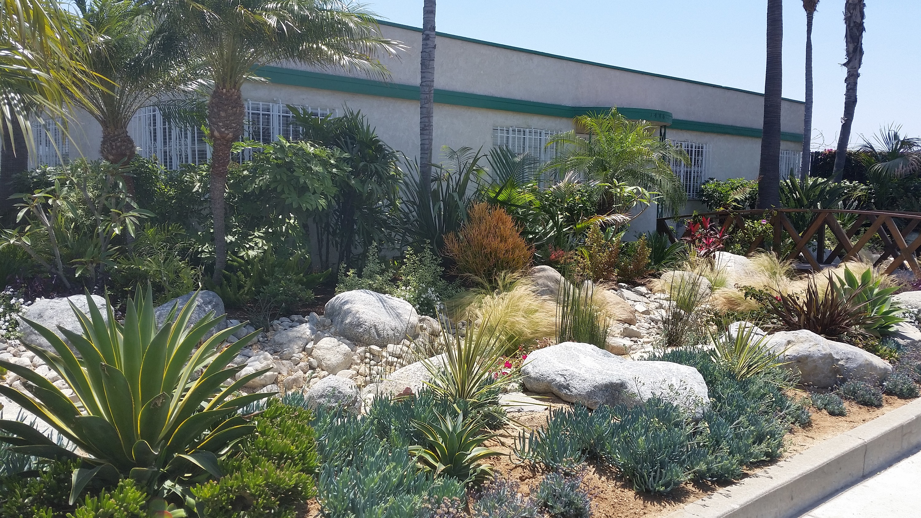 Xeric garden with rocks and plats beside a building